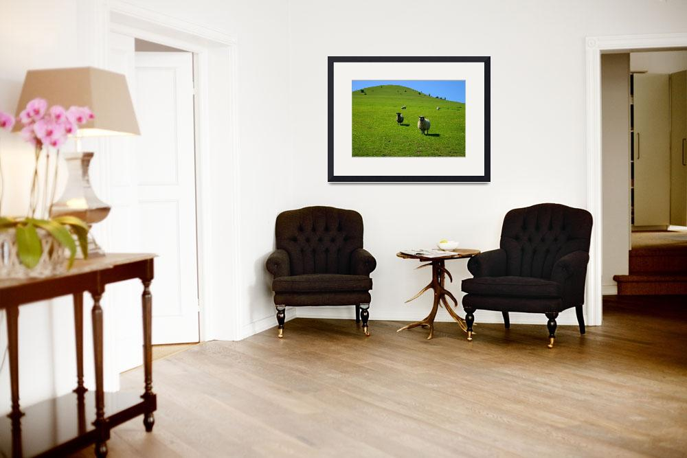 """""""Sheep on rounded green hill&quot  (2008) by pelvidge"""