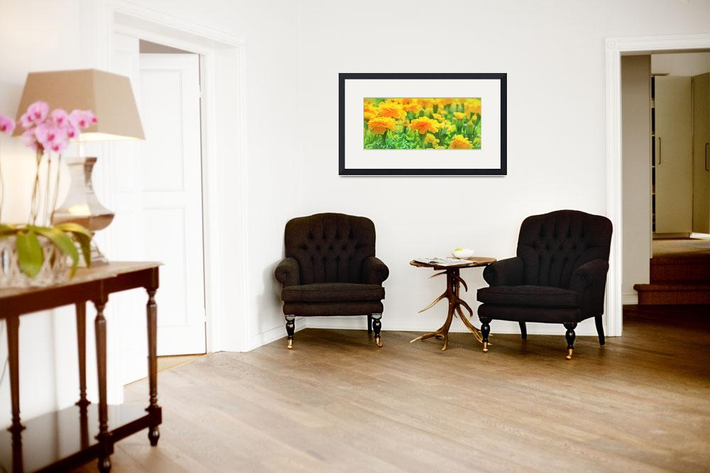 """""""Marigolds""""  (2013) by charker"""