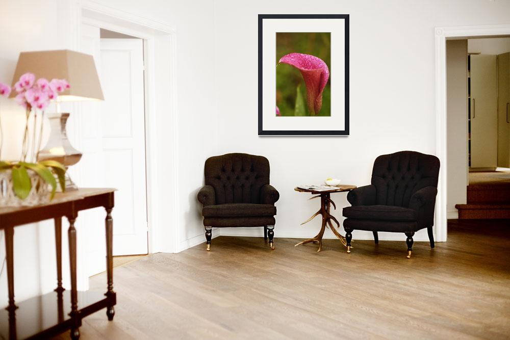 """""""Single Pink Calla Vertical""""  (2005) by AmbientCreations"""