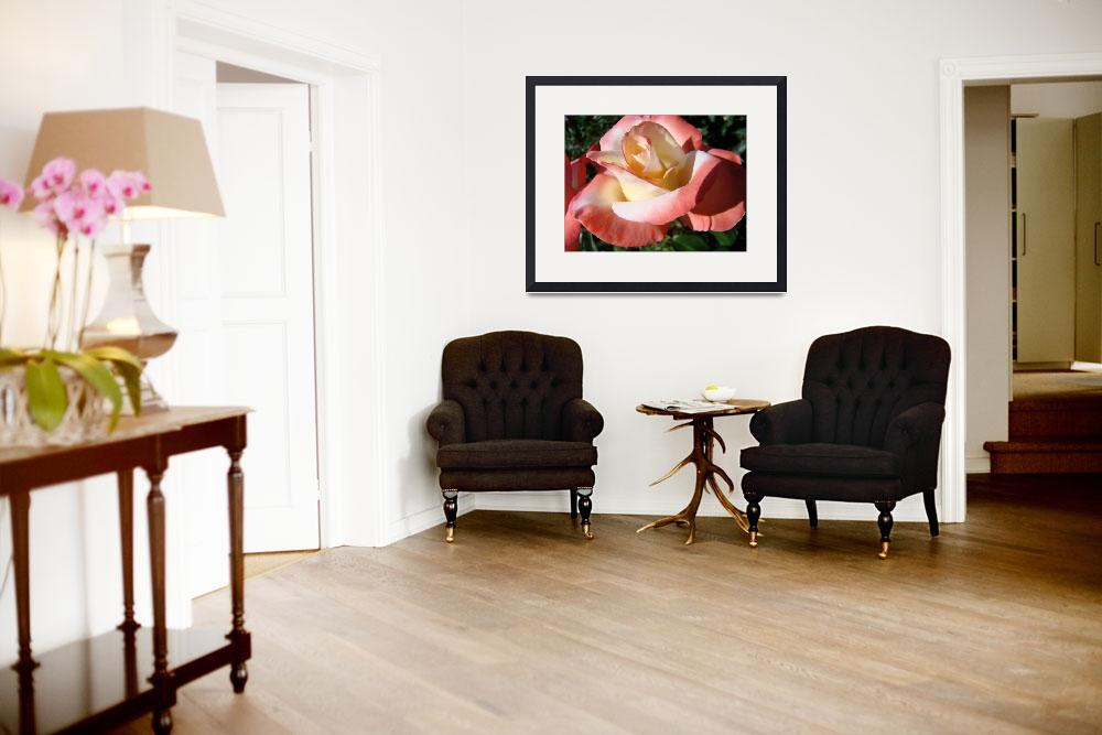 """""""Christmas Gift Gallery Velvet Pink Rose Art Gifts""""  (2009) by BasleeTroutman"""