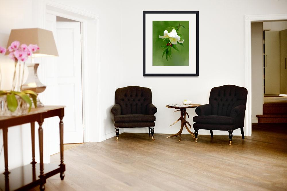 """White Lilly One_&quot  (2008) by mknzedesigns"