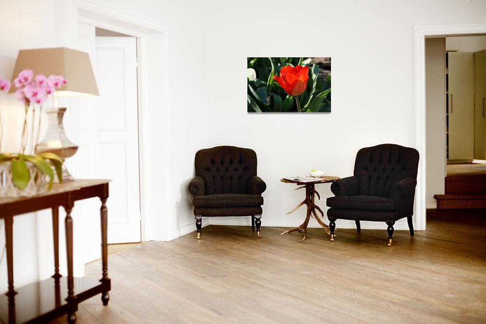 """""""RED Tulip Flowers Art Prints Giclee Canvas""""  (2014) by BasleeTroutman"""