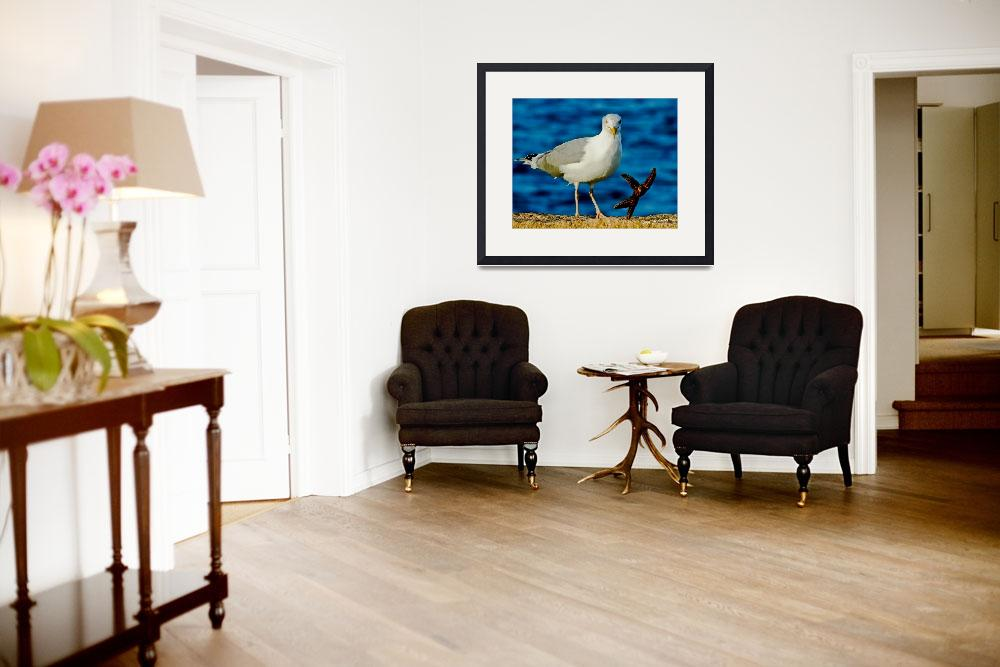 """""""Seagull Dancing with a Star&quot  (2012) by PhotographsByCarolFAustin"""