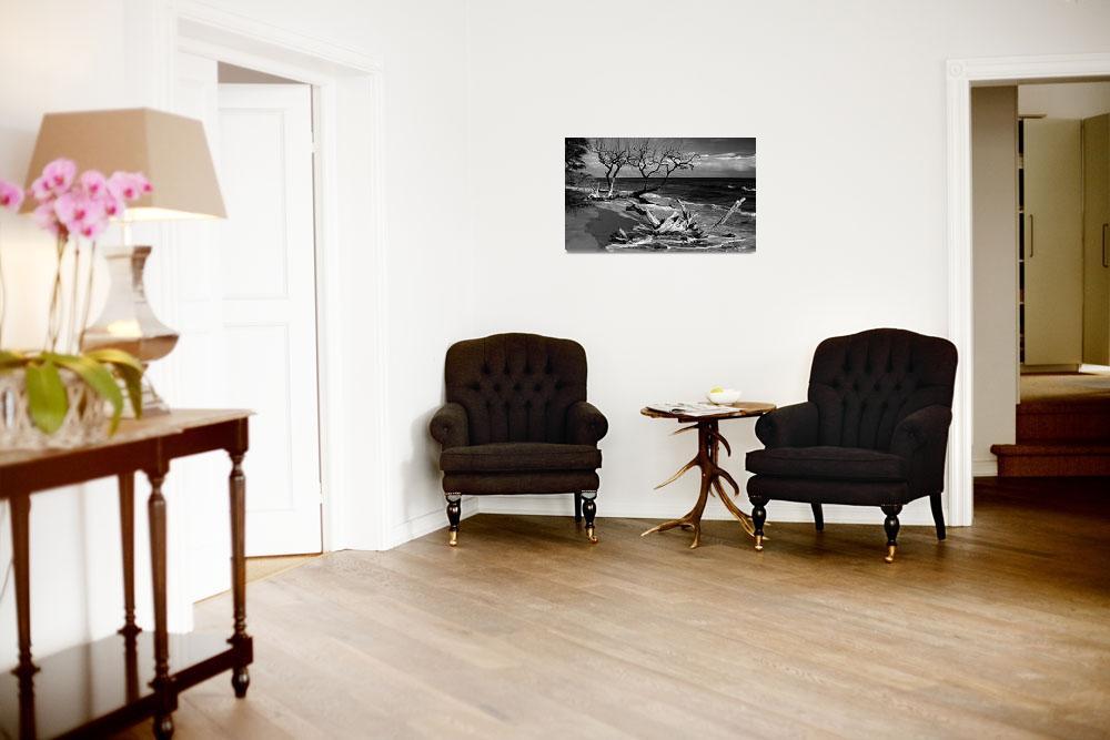 """Black and White Driftwood Fine Art Print&quot  by lightningman"