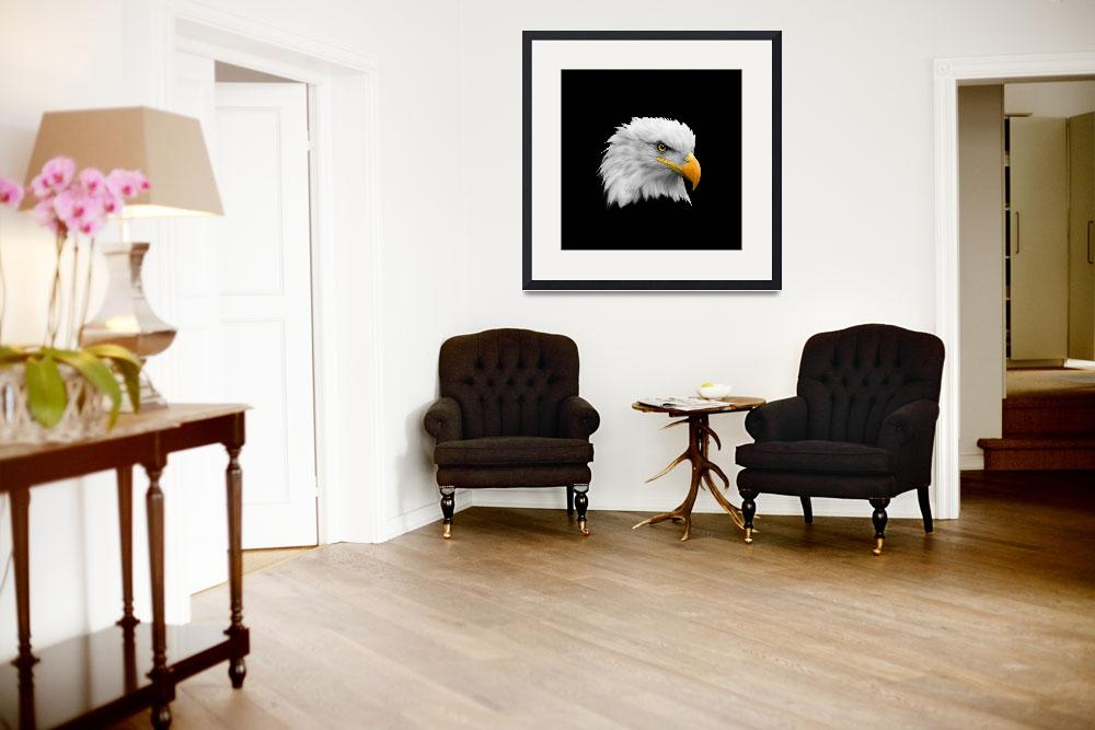 """""""The Bald Eagle&quot  by mark-rogan"""