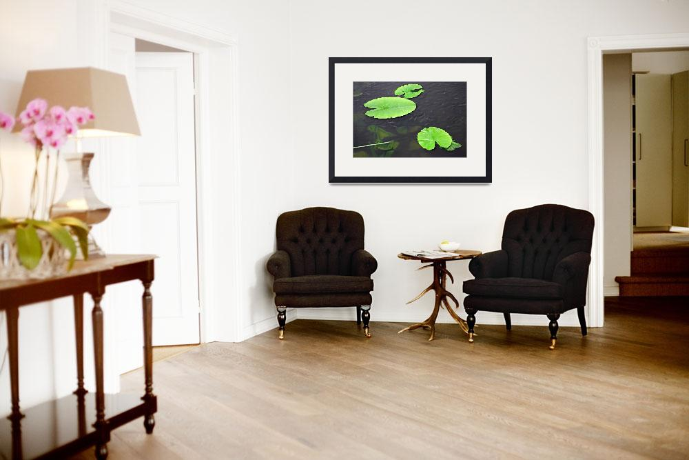 """""""Baby Fish Swimming Around the Lily Pads (30998-RDA&quot  (2012) by rodjohnson"""