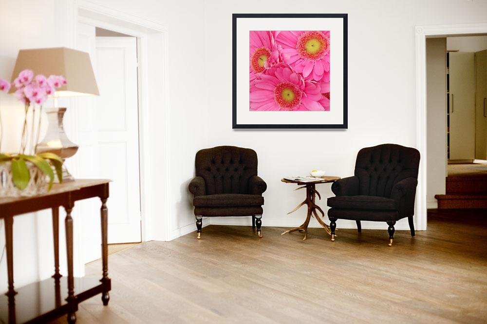 """""""Pink Gerbers Square&quot  (2009) by AmyVangsgard"""