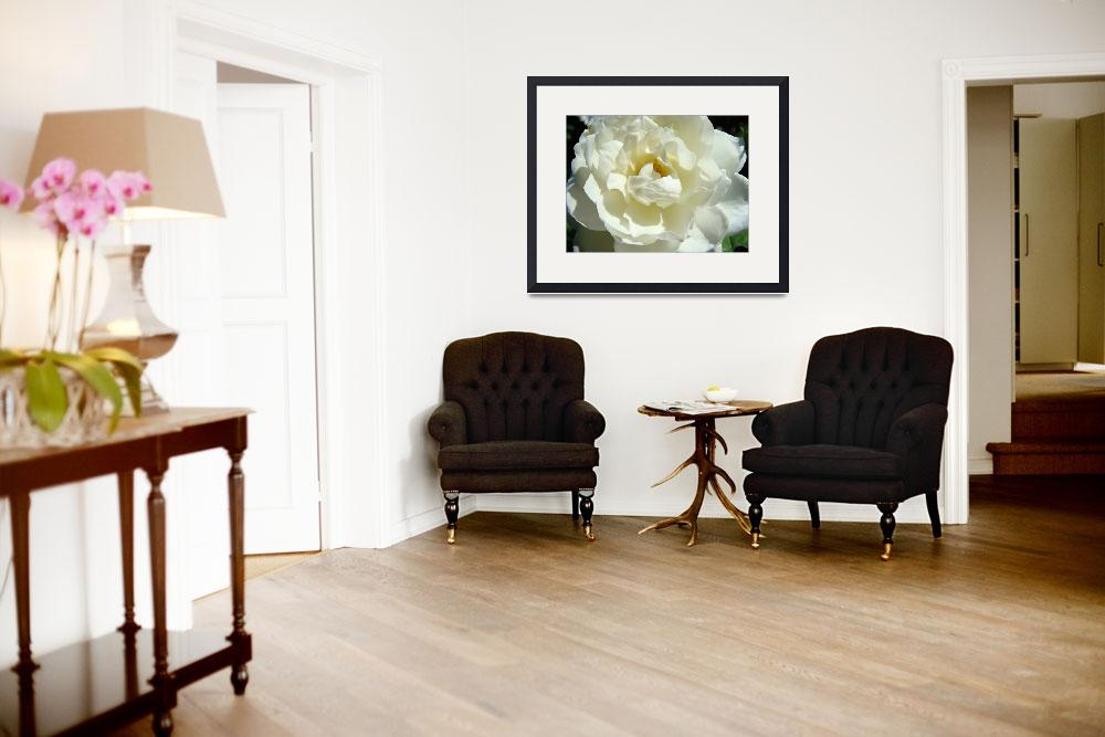 """""""Christmas Gift Gallery White Rose Art Baslee&quot  (2009) by BasleeTroutman"""