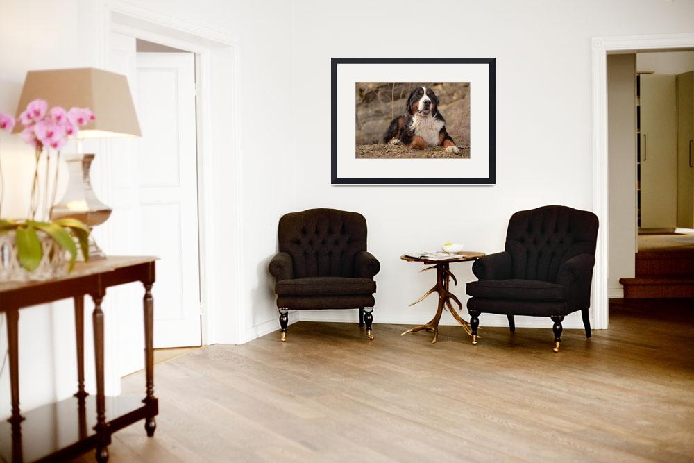 """Bernese Mountain Dog""  (2011) by FotoFlaunt"
