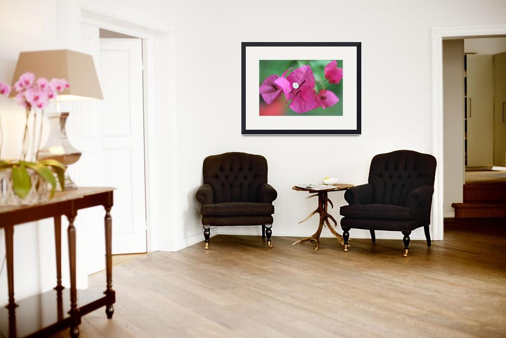 """""""Bougainvillea&quot  (2012) by rumberger"""