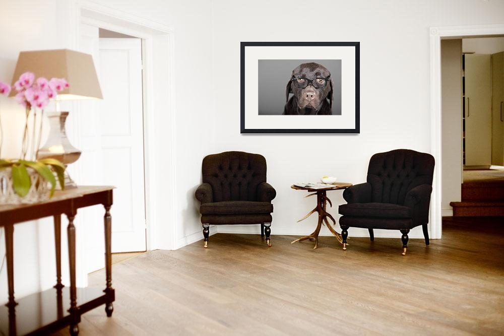 """""""Labrador in Thick Rimmed Glasses&quot  (2009) by jmpaget"""