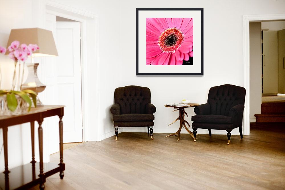 """Pink Gerbera Daisy""  (2010) by johncorney"