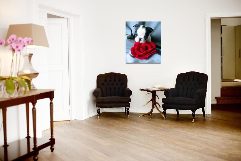 """""""Boston Terrier with Red Rose""""  (2002) by ACuteProduction"""