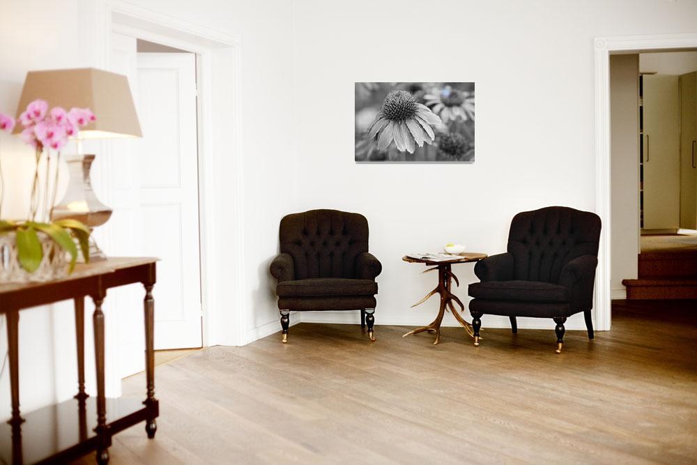 """Echinacea  Coneflowers BW&quot  (2012) by lightningman"