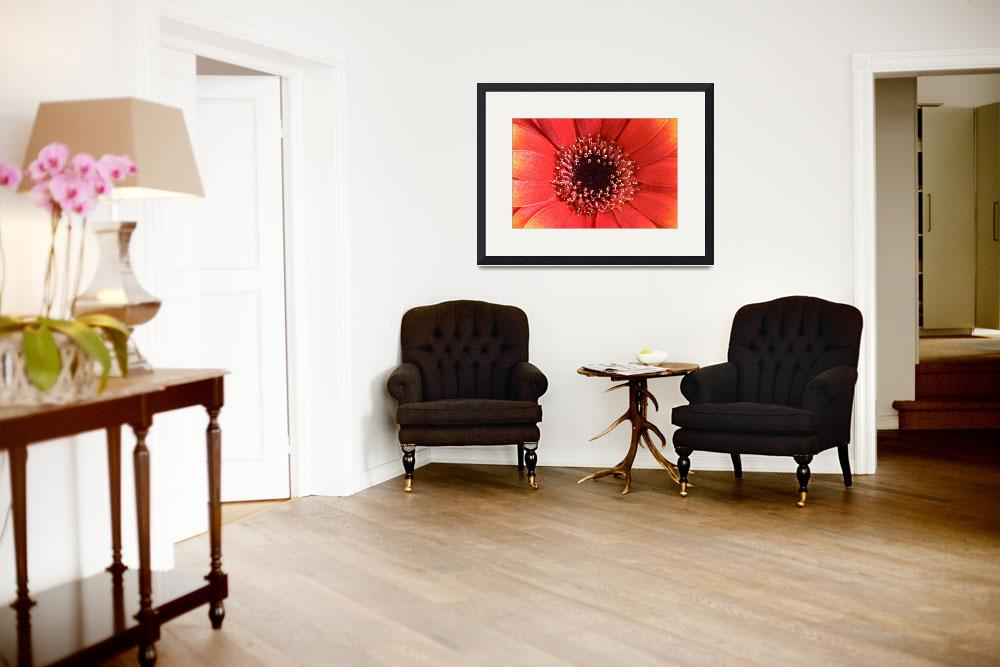 """Orange Gerbera Flower Wall Art&quot  (2004) by NatalieKinnear"