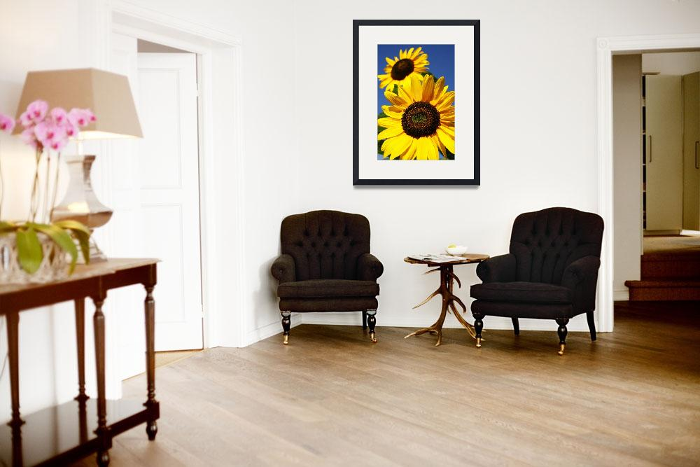 """Sunflowers""  (2006) by gavila"