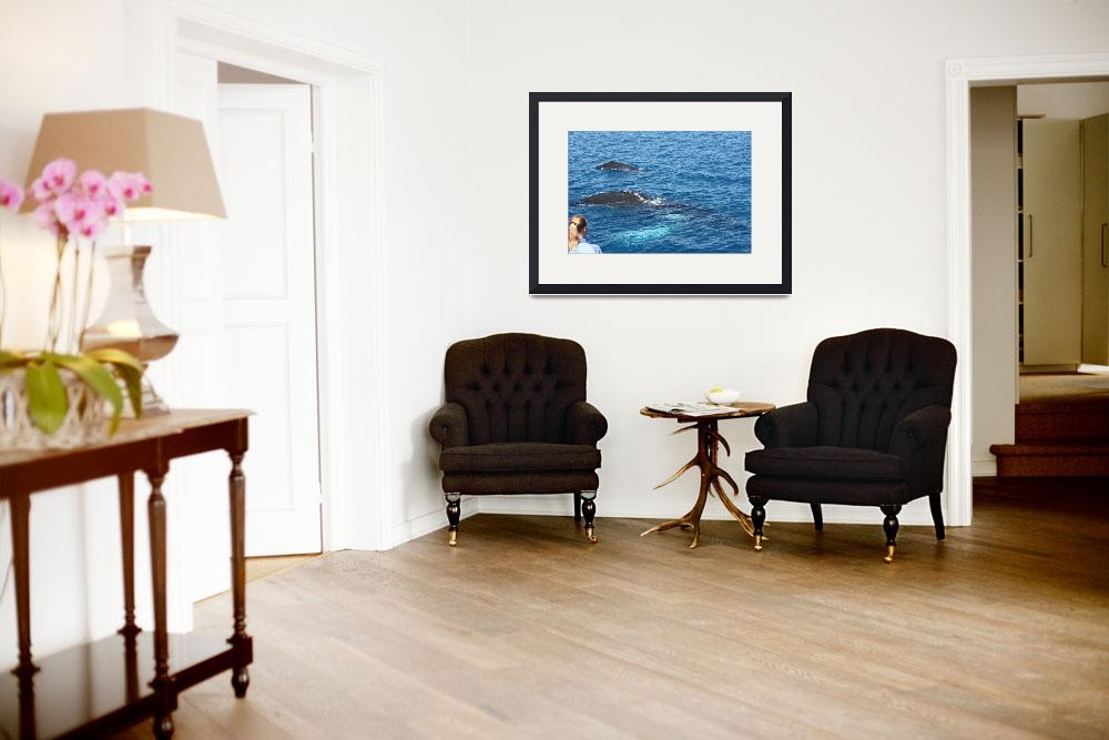 """""""NaP_ Whale Watching058&quot  by nevilleprosser"""