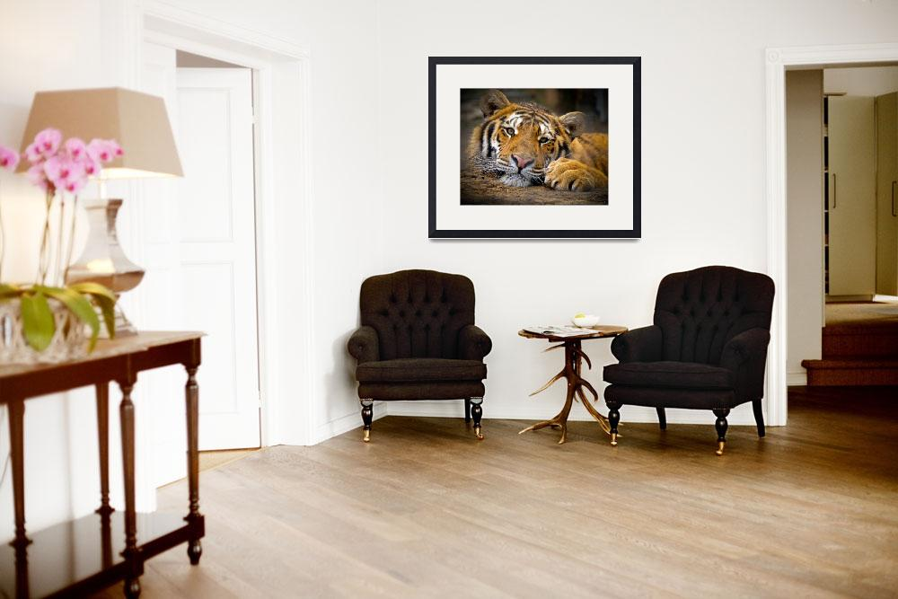 """""""Content Tiger&quot  (2002) by AnzalonePhoto"""