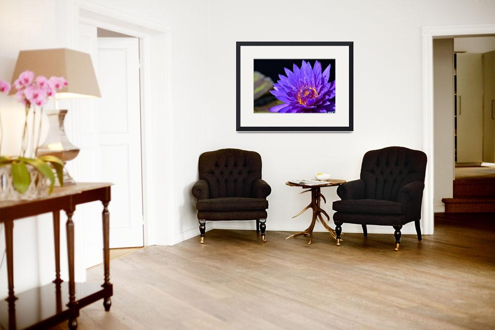 """""""Vibrant Water Lily&quot  (2011) by Winegeek"""
