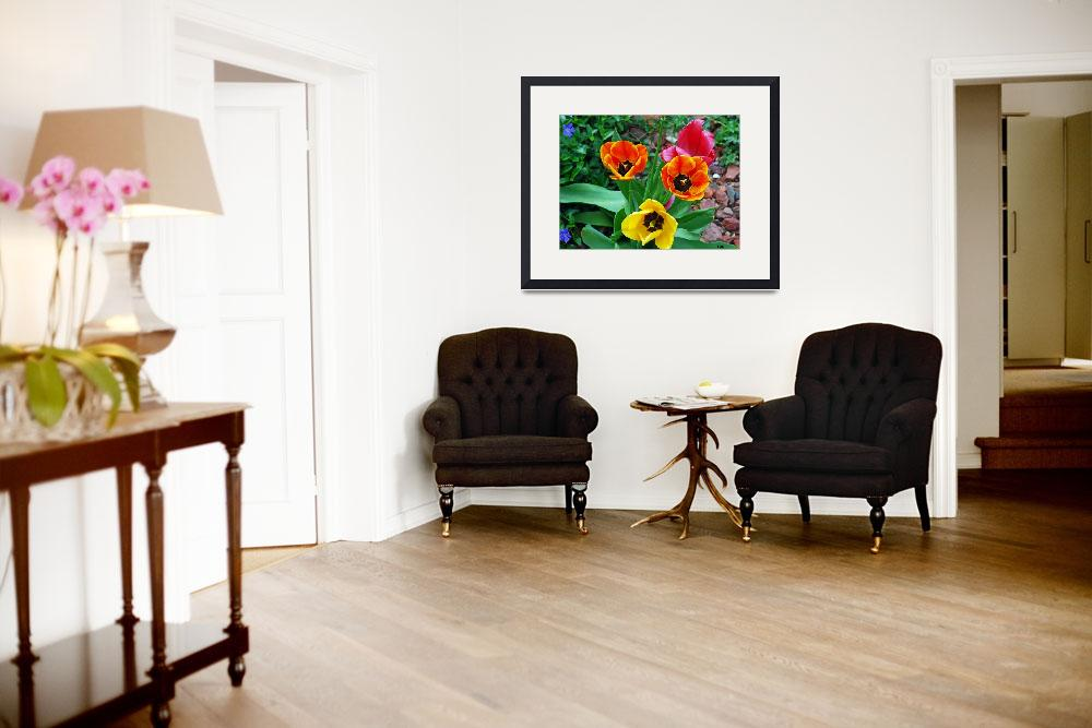 """""""LOVELY LARGE DUTCH TULIPS""""  (2008) by Mysticphotos"""
