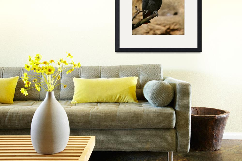 """""""Grey African Parrot&quot  by mellting"""