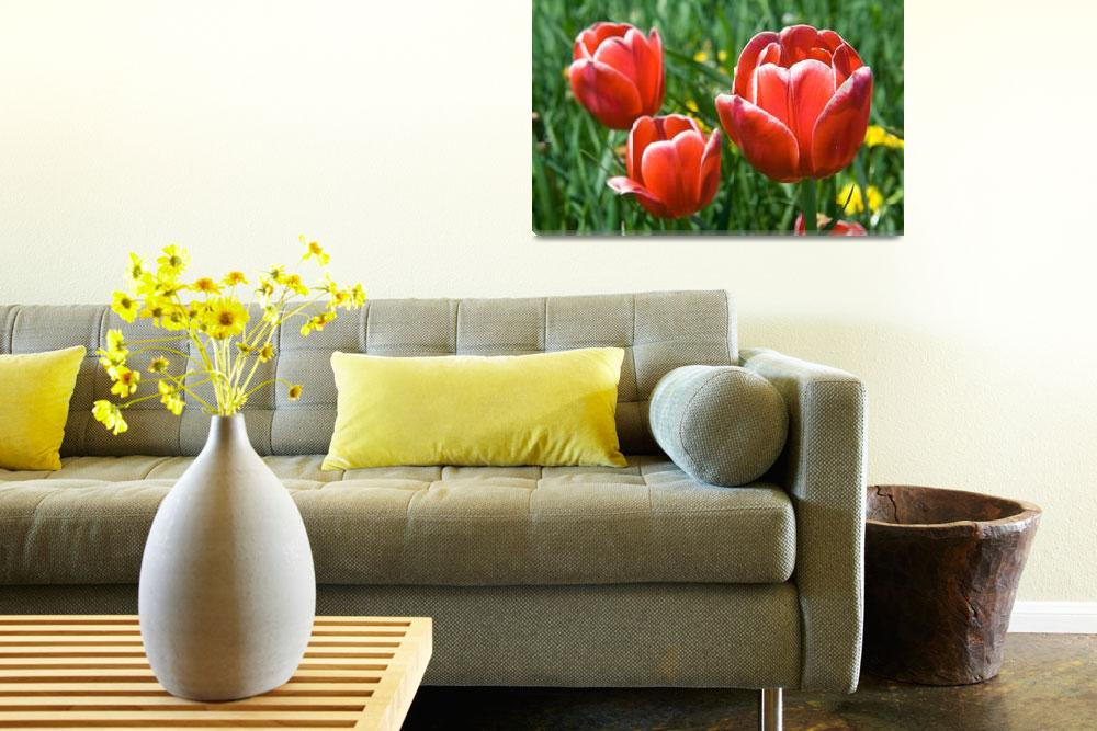 """tulip greeting card&quot  (2008) by photosbysmith"