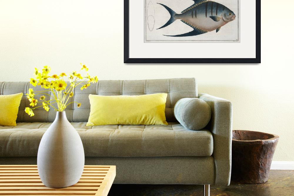 """""""Vintage Illustration of a Palometa Fish (1785)&quot  by Alleycatshirts"""