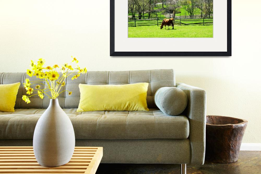 """Cow Grazing in Pasture in Spring&quot  by susansartgallery"