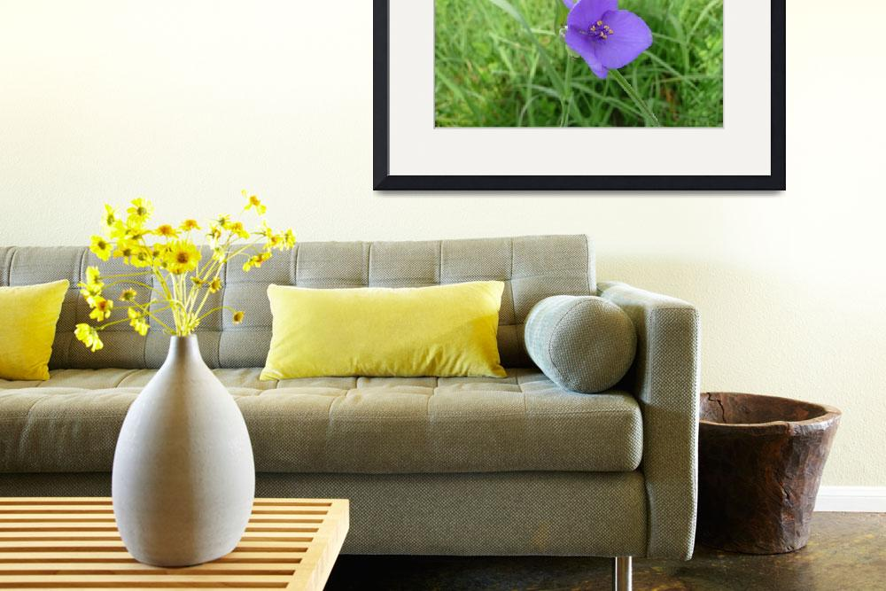 """Purple Spiderwort, Dee Oberle&quot  (2007) by GypsyChicksPhotography"