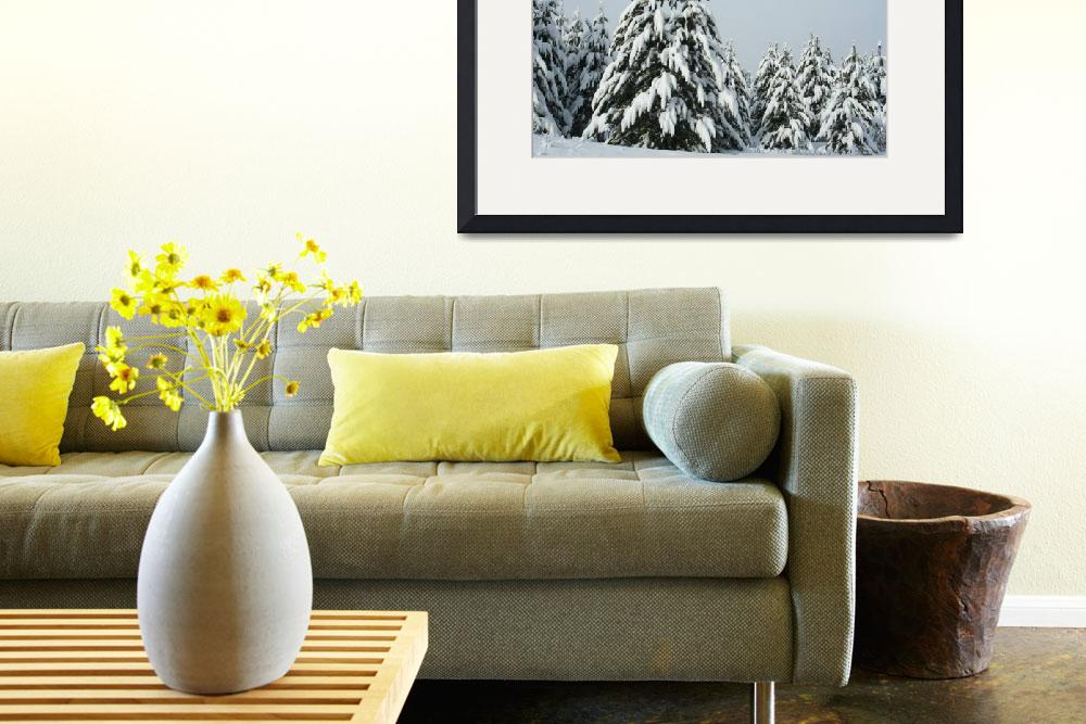 """""""Pines heavy with snow.&quot  by CarmenL"""