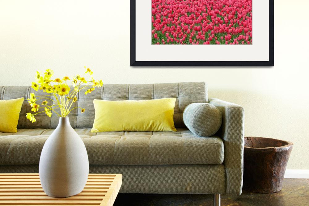 """""""Fields of Red Tulips&quot  by vicki"""