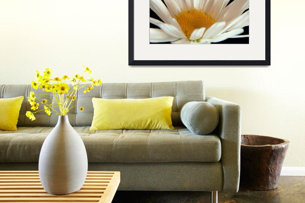 """""""Flower 02c Daisy White Spring Floral Macro&quot  (2010) by Ricardos"""