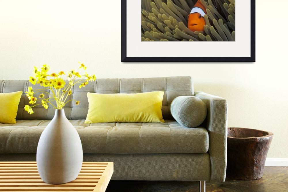 """""""Clown Anemonefish&quot  (2000) by markstrickland"""