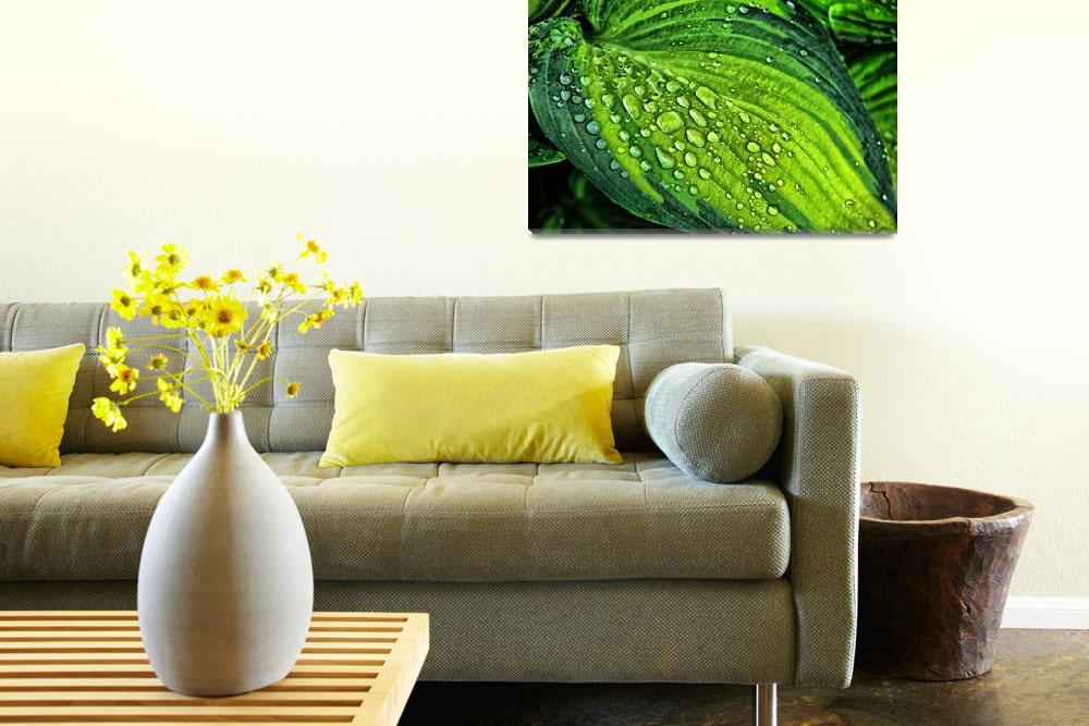 """""""Beautiful green leaf with waterdrops""""  by PositiveImage"""