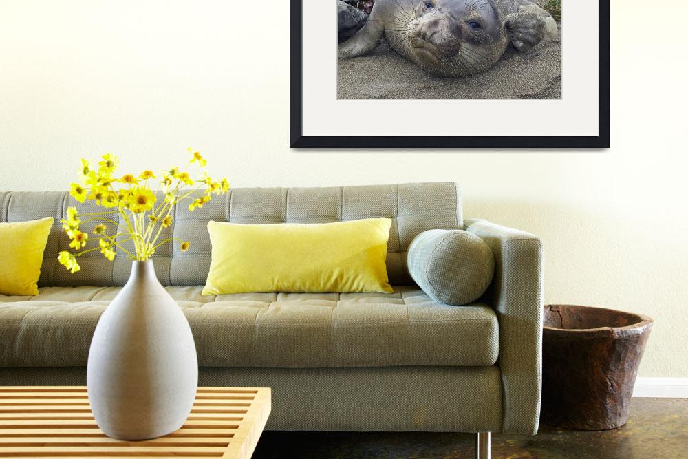"""Elephant Seal thought II&quot  by eyalna"