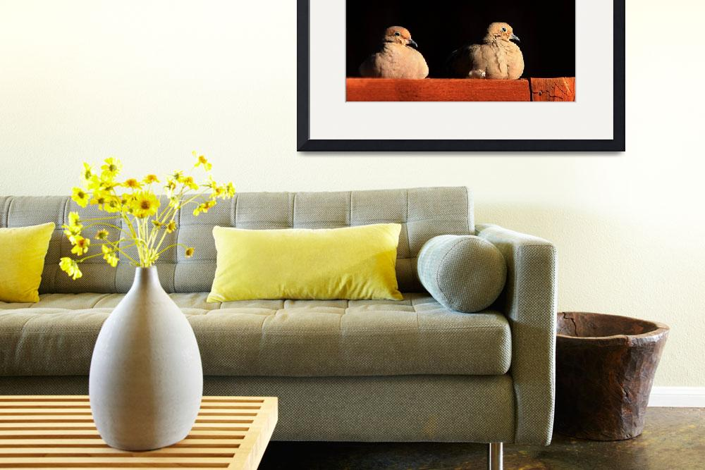 """""""Pair of Mourning Doves 7503&quot  (2011) by rayjacque"""