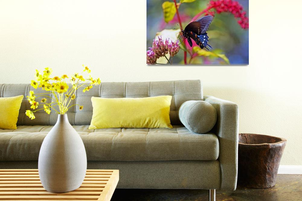 """Butterfly  Pipevine in Summer Garden&quot  (2012) by KsWorldArt"