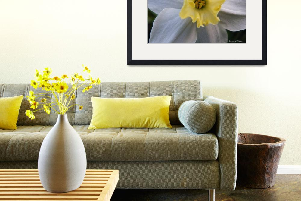 """""""Daffodil Emotions&quot  (2011) by Kimmary"""