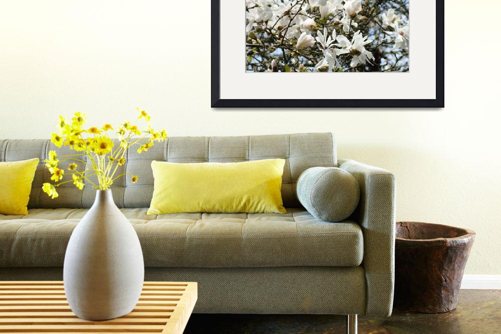 """""""WHITE Magnolia Flower Tree Spring Flowers Art&quot  (2009) by BasleeTroutman"""