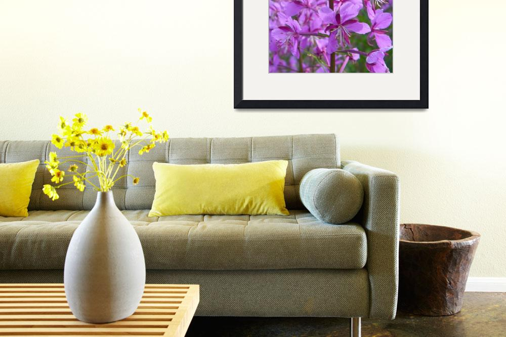 """""""Botanical - Alpine Fireweed - Outdoors Floral&quot  by artsandi"""