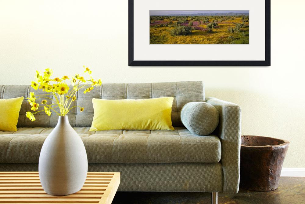 """""""High angle view of wildflowers in a landscape&quot  by Panoramic_Images"""