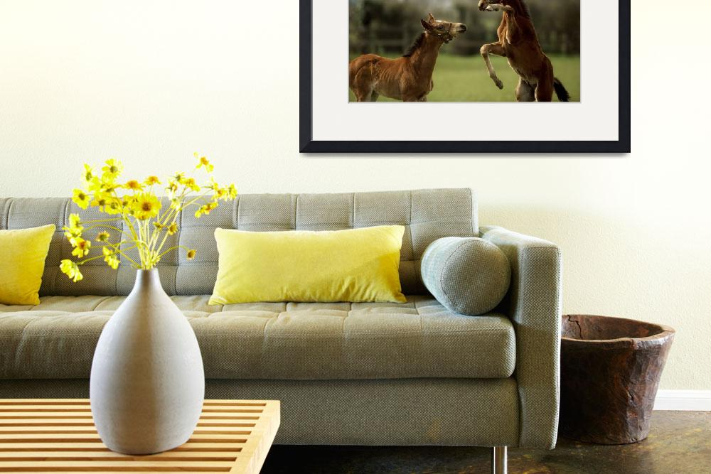 """""""Thoroughbred Foals Playing, Ireland&quot  by DesignPics"""