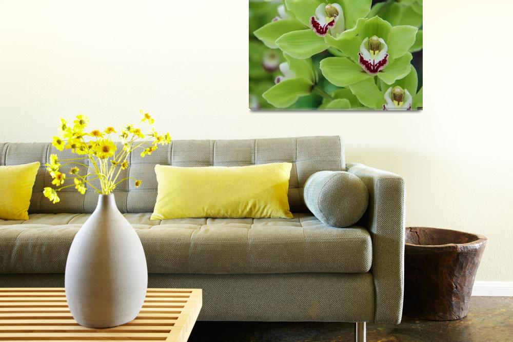 """""""Green Orchids&quot  (2014) by ramas"""