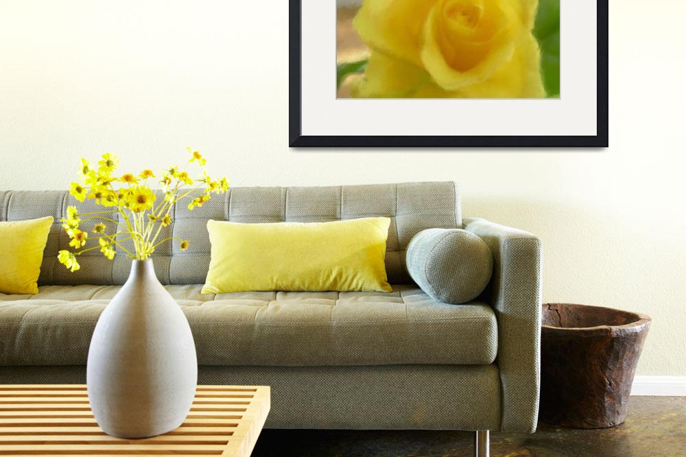 """YELLOW ROSE""  (2011) by shaynaphotography"