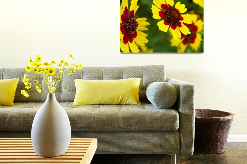 """""""Rise and Shine Plains Coreopsis Wildflower&quot  (2012) by vpicks"""