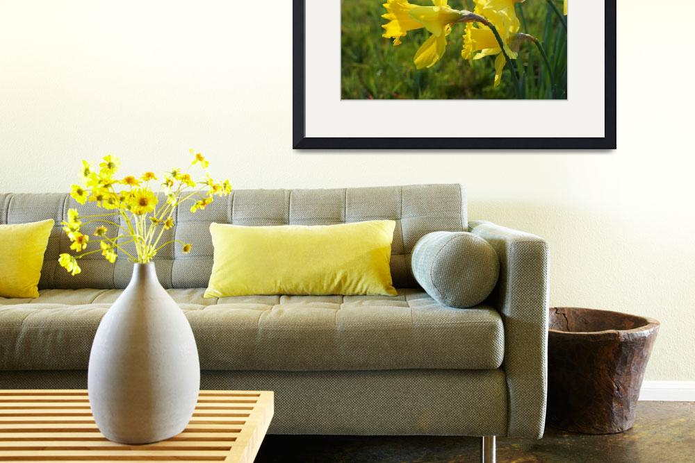 """Daffodils Flowers Fields Meadow Art Prints&quot  (2014) by BasleeTroutman"