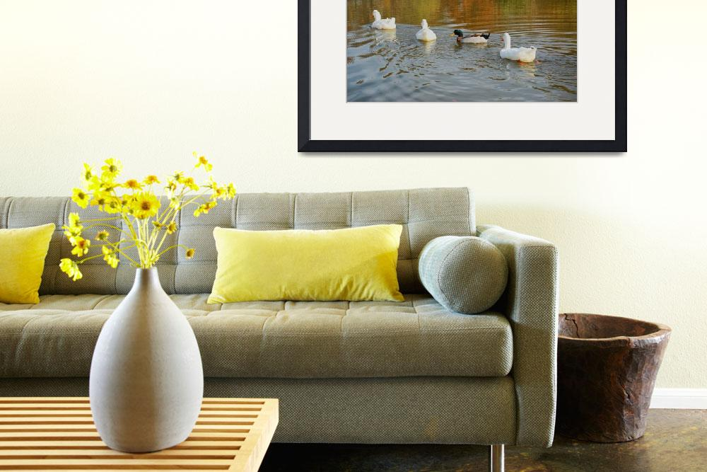 """Ducks in Pond&quot  (2009) by RandyWilliams"