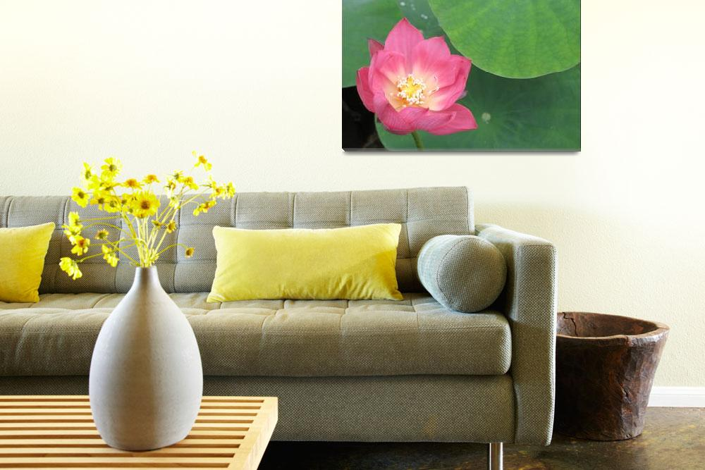 """""""In Bloom - Lotus """"Sunny Sky""""&quot  (2006) by CRS"""