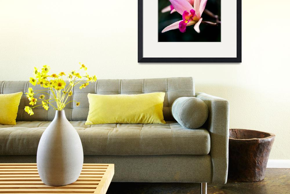 """""""Orchids""""  (2011) by eyedocal"""