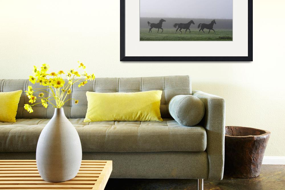 """""""Three horses running in a misty landscape&quot  by Taka"""